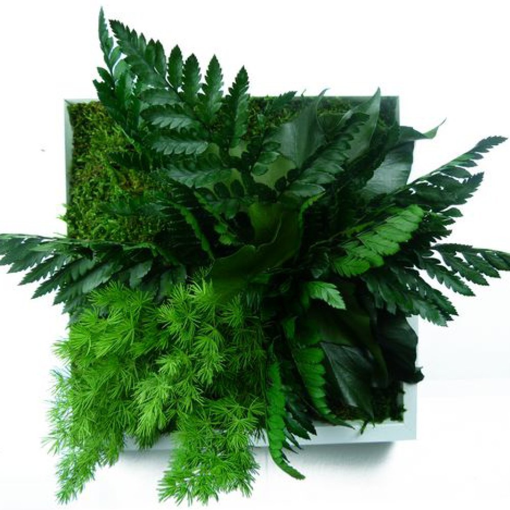 Plantes faciles entretenir conseils prix et recommandations - Cadre vegetal jardiland ...