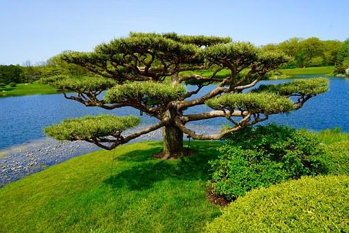 Jardin japonais le guide complet pour un jardin r ussi for Acheter jardin japonais