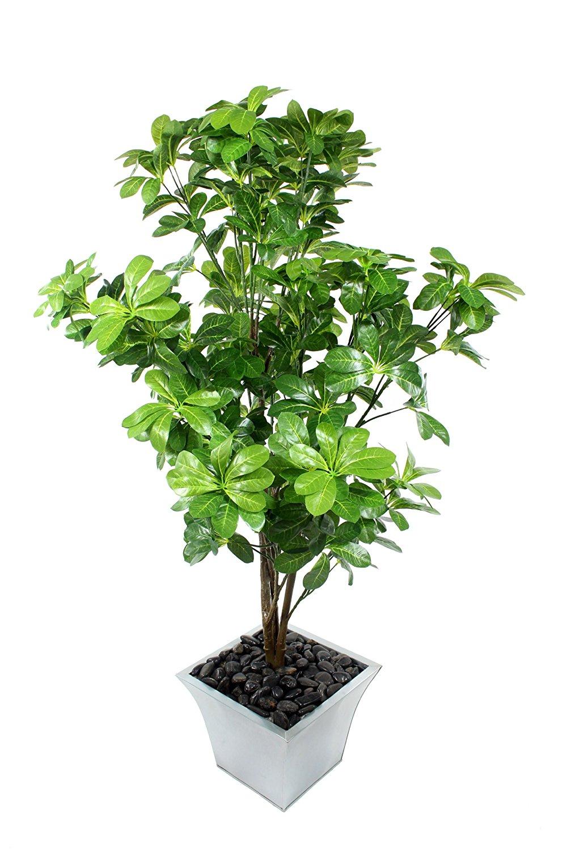 plante necessitant peu de lumiere fabulous plantes vertes intrieur facile entretien ide pot. Black Bedroom Furniture Sets. Home Design Ideas