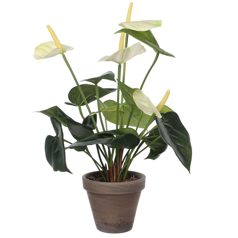 plante dépolluante d'intérieur : conseils, prix et recommandations