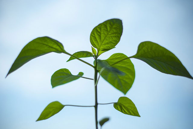 Plante d polluante d int rieur conseils prix et for Acheter plante interieur