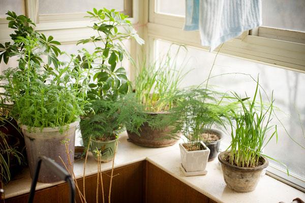 plantes faciles entretenir conseils prix et recommandations. Black Bedroom Furniture Sets. Home Design Ideas