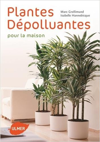 plante d polluante d int rieur conseils prix et. Black Bedroom Furniture Sets. Home Design Ideas