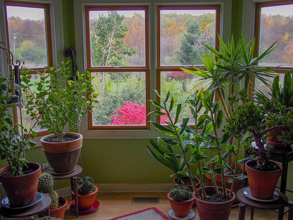 Jardin d int rieur le guide complet pour un jardin r ussi - Piante grasse da interno poca luce ...